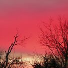 Brilliant Sunrise,  Elkins, Arkansas by David  Hughes