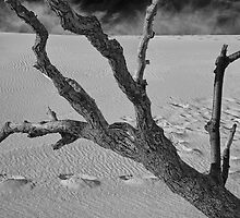 Tree branch at Sleeping Bear Dunes by Randall Nyhof