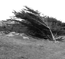 Wind Blown Leaning Tree by Honeyscolors