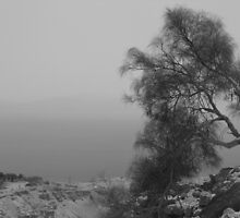 Tree with Dead Sea in Background by Adam Isaacson
