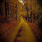 Autumn walk by StefanFierros