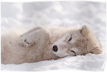 Sleepy Time by Bill Maynard