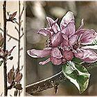 Crabapple Tree Diptych by Brenda Boisvert