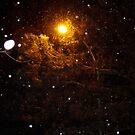 Winter Light by fairielights