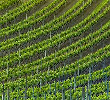 Vineyard 6 by fotoWerner