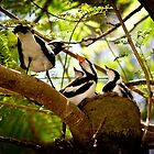 Baby Birds by Ryan Devenish