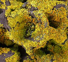 Lichen by BK Photography