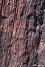 """General Noble Tree - """"Chicago Stump"""" Detail 3 by Alex Preiss"""