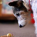 Dog vs Bug by SpiralPrints