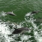 Dolphins at play by Julia Harwood