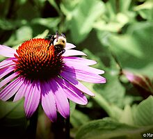 Busy Bee by Marcia Rubin