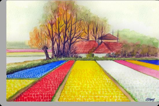 BULB FIELDS AND A DUTCH FARM - AQUAREL by RainbowArt