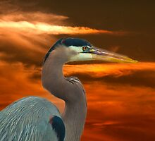 Great Blue Heron at Dusk by imagetj