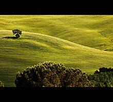 Toscana #4 by dgt0011