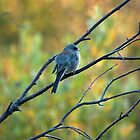 Bird In The Fall Morn by J. L. Gould