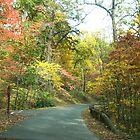 Autumn Trail by Carol E. Davis