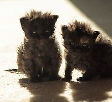 Kittens in sunlight by starbucksgirl26