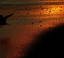 #509    Sand Piper & Glowing Sands by MyInnereyeMike