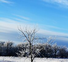 Frosted Farm by Alyce Taylor