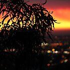Fire Sky by Amy Dee