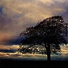 Moody Tree landscape, Gloucestershire, UK by buttonpresser