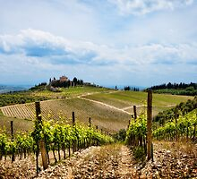 Sangiovese, Canaiolo or Merlot? by dgt0011