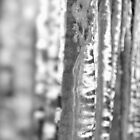 Icicles by Sarah Howarth [ Photography ]