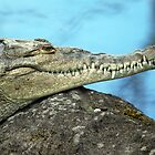 American Crocodile (Crocodylus actus) - Costa Rica by Jason Weigner