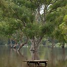 Flooded Barwon River by Cecily McCarthy