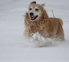 So Happy It's Snowing! by AliceMc