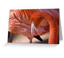 Flaming Flamingo Greeting Card