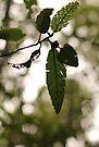 Stages of leaf by Jocelyn  Parry-Jones