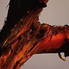 sunset madrona by dedmanshootn