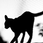 Feline Silhouette by Richard Lam