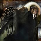 Andean Condor Portrait. I think she&#x27;s beautiful but to her I am just another piece of meat. by alan shapiro