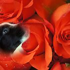 Fitz amongst  the roses by Joyce Knorz