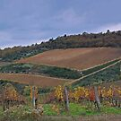Vineyard Castellina in Chianti by Matt Bishop