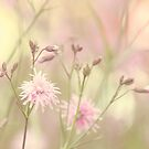 Pastel garden by Anne Staub