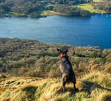 Dog Day Afternoon - Gummers How Views by Jamie  Green