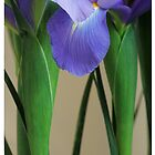 Iris Time by Rene Hales