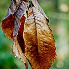 Bunch of Leaves by Karen Martin