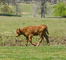 young calf all sad and dejected by clearviewstock