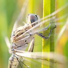 Newly emerged dragonfly #3 by clearviewstock