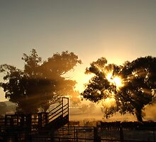 Cattle Sunrise 3 - Parkes, NSW by clearviewstock