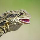 Smile! Eastern Water Dragon by clearviewstock