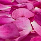 Rose Petals by clearviewstock