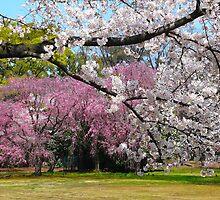 wonderful sakuras by supergold