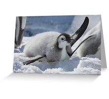 Emperor chick Greeting Card