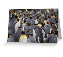 King penguins rookery Greeting Card