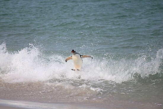 Gentoo's style surfing by Marion Joncheres